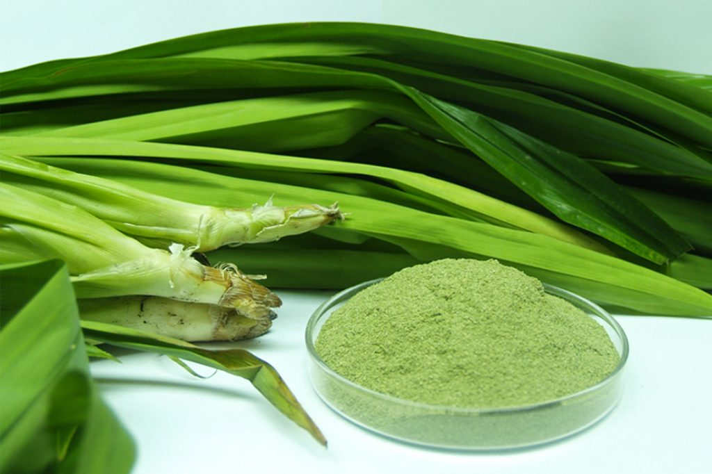 The Incredible Health Benefits and Multiple Uses of Pandan